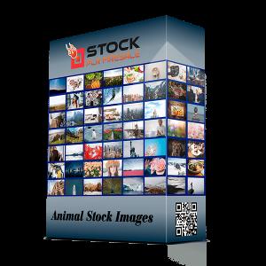 STOCK de Imágenes de animales